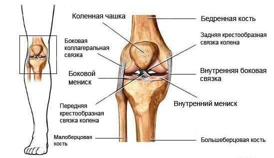 плечелучевой сустав